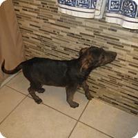 Adopt A Pet :: Ricky - Moreno Valley, CA