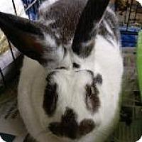 Adopt A Pet :: Dudley - Woburn, MA