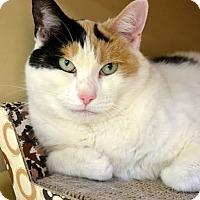 Adopt A Pet :: Macy - Hamilton, ON