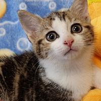 Adopt A Pet :: Bree-adoption pending - Berlin, CT