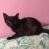 Adopt A Pet :: Sploosh - Addison, IL