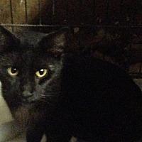 Adopt A Pet :: Slinky - Laingsburg, MI