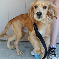 Adopt A Pet :: Rudy - Sherman Oaks, CA