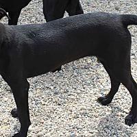 Adopt A Pet :: Bella - Clear Lake, IA