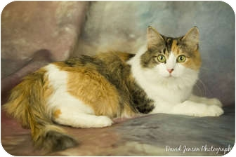 Domestic Shorthair Cat for adoption in Anchorage, Alaska - Rory