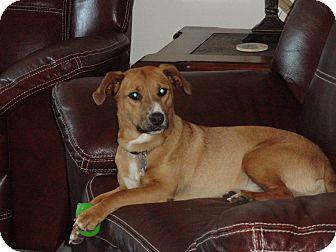 Beagle/Terrier (Unknown Type, Medium) Mix Dog for adoption in Sierra Vista, Arizona - Toby