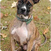 Adopt A Pet :: Otis - Chicago, IL