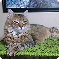 Adopt A Pet :: Tasha - Walla Walla, WA