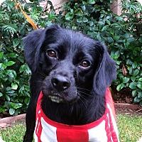 Adopt A Pet :: RICHIE - Irvine, CA