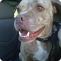 Adopt A Pet :: LUCY - Malibu, CA