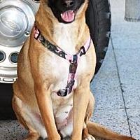 Adopt A Pet :: Chica - Gilbert, AZ