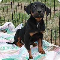 Adopt A Pet :: Mars $250 - Seneca, SC