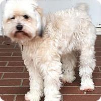 Adopt A Pet :: Chelsea - Atlanta, GA
