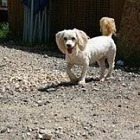 Adopt A Pet :: Lil Bunny Foo Foo (jo jo) - Hankamer, TX