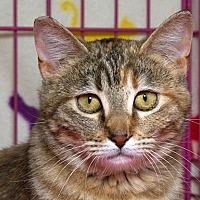 Adopt A Pet :: Foxy W - Sacramento, CA