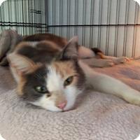 Adopt A Pet :: Jaylynn - Medford, WI