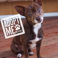 Adopt A Pet :: Panda - Fort Valley, GA
