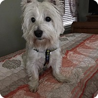 Adopt A Pet :: LUCKY - Frisco, TX