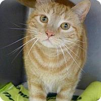 Adopt A Pet :: Orange Happy - Batavia, NY