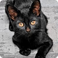 Adopt A Pet :: Diesel - Jackson, MS