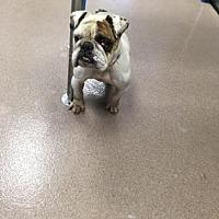 Adopt A Pet :: Ugga - Decatur, GA