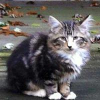 Adopt A Pet :: Baby - Central Islip, NY