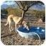 Photo 4 - Shepherd (Unknown Type) Mix Dog for adoption in Thatcher, Arizona - Smiley