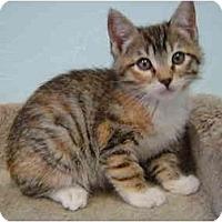 Adopt A Pet :: Melody - Modesto, CA
