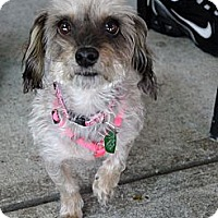 Adopt A Pet :: Princess - Baton Rouge, LA