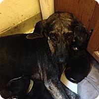 Adopt A Pet :: Bella - Cranston, RI
