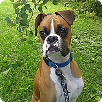 Adopt A Pet :: Odie - Welland, ON