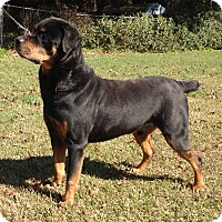 Adopt A Pet :: Bruno Mars - Alachua, GA
