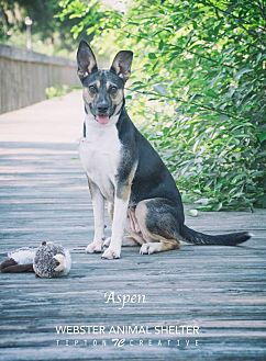 Australian Cattle Dog Mix Dog for adoption in Webster, Texas - Aspen