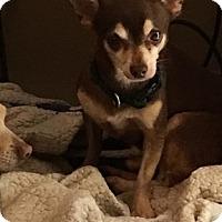 Adopt A Pet :: Brownie - Brooksville, FL