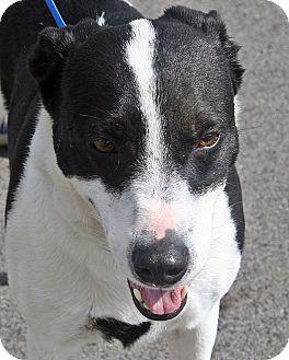 Mixed Breed (Medium) Mix Dog for adoption in Beebe, Arkansas - Duke