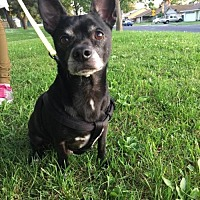 Adopt A Pet :: Blackjack - Los Banos, CA