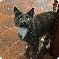 Adopt A Pet :: Dean Martin - Atlanta, GA
