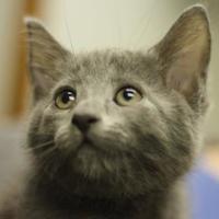 Adopt A Pet :: Apollo - Huntingdon, PA