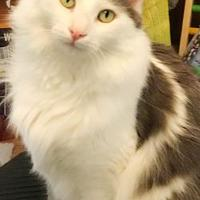 Adopt A Pet :: Duffy - Philadelphia, PA
