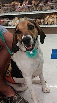 Foxhound Mix Dog for adoption in Columbus, Indiana - Meg
