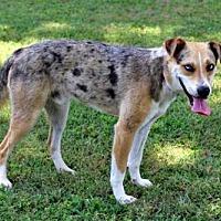 Adopt A Pet :: WYATT EARP - Andover, CT