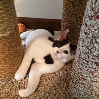 Adopt A Pet :: Moo Moo - Muskegon, MI