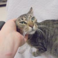 Adopt A Pet :: Nala - Gulfport, MS