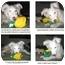 Photo 3 - Australian Shepherd Mix Puppy for adoption in Mesa, Arizona - Bristal