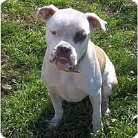 Adopt A Pet :: Wilson - Bakersfield, CA