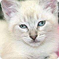 Adopt A Pet :: Annalee - Clinton, LA