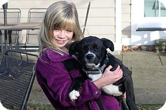 Labrador Retriever/Boxer Mix Dog for adoption in berwick, Maine - Alexis