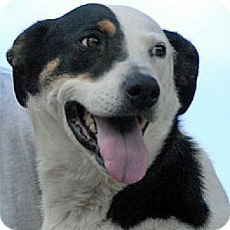 Hound (Unknown Type) Mix Dog for adoption in Mountain Center, California - Molly