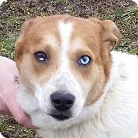Adopt A Pet :: Linus - Huntingburg, IN
