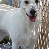 Adopt A Pet :: TJ - Knoxville, TN